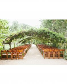 What an alternative to an open-sky venue: this wedding ceremony took place under a canopy of grape vines.