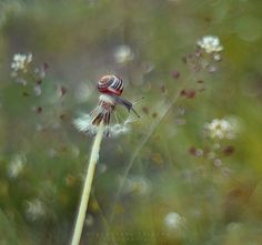 Gorgeous Photographs by Katarzyna Zaluzna Capture The World Of Snails