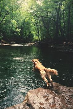 From hiking hounds to couch puptatoes, find the right adventure for you and your best pal!