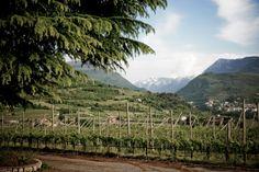Vigneti delle Dolomiti Vineyard, Mountains, Landscape, Nature, Travel, Outdoor, Outdoors, Scenery, Naturaleza