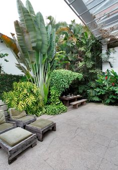 Pergola, Tropical Landscaping, Modern Living, Trees To Plant, Planting, Greenery, My House, Home And Garden, Gardens