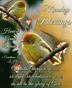 Good Morning Good Night, Good Night Quotes, Good Morning Wishes, Happy Monday Morning, Today Is Monday, Monday Blessings, Morning Blessings, Monday Greetings, Ways To Be Healthier