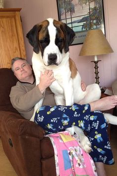 """12 Enormous Dogs Who Are Actually Just Big Babies #refinery29 http://www.refinery29.com/the-dodo/166#slide-5 """"Sorry, I...I thought I saw a mouse."""""""