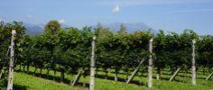 Wine tasting in Lake Garda at - La Meridiana - Things To Do In Lake Garda