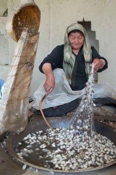 Hotan China - silk moth cocoons