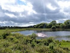 Co. Clare: Rinroe Pond. Irish Landscape, Pond, My Photos, River, Outdoor, Outdoors, Water Pond, Rivers, Outdoor Life