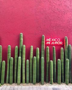 Treat Yourself To A Romantic Vacation In Mexico Mexico Vacation, Mexico Travel, Tulum, Mexico Wallpaper, Mexico Culture, Romantic Vacations, Mexican Art, Red Aesthetic, Day Trips