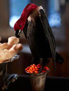 bhg Halloween bird