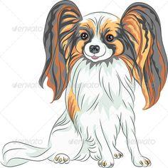 Papillon Dog Breed