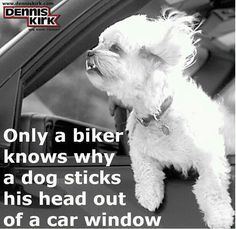 There are some things only a biker knows, as my hubby will confirm! Biker Wear, American Motorcycles, Harley Bikes, My Philosophy, Motorcycle Style, Sister Love, Biker Chick, Losing A Pet, Cute Quotes