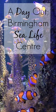 We headed to the latest exhibition at Birmingham's Sea Life Centre, to try and Find Dory. An excellent day out in Birmingham with children.