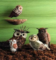 Pinecone Owls: feathers for the face?