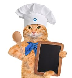 I will be deciding the menu tonight - this cat is humorous Kitchen Stand Mixers, Kitchen Mixer, Kitchen Tools, Appliance Reviews, Kitchen Humor, Small Appliances, Funny Animals, Teddy Bear, Animal Humor