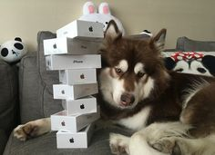 Son of Chinas richest man buys 8 iPhone 7s for his dog. See photos!