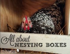 All about Chicken Coop Nesting Boxes