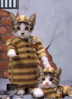 Looks like they walked on the wild side once too often. Um, there is no explanation for cats dressed this way except for really cold...