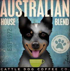 Australian Cattle Dog Coffee Company original graphic illustration  on canvas 12 x 12 by stephen fowler. $80.00, via Etsy.