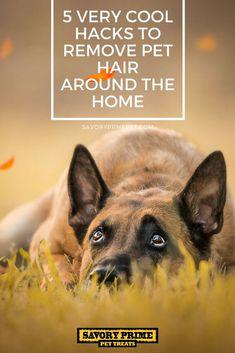 5 Very Cool Hacks to Remove Pet Hair Around the Home | Savory Prime Pet Treats