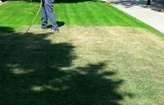 Four Tips for Painting Lawns Green #drought