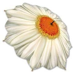 Daisy Umbrella, this will brighten any rainy day! I want one!