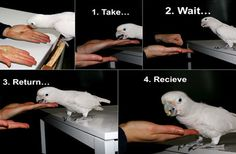 Parrots Barter With Nuts : Discovery News
