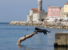 Piran, Slovenia--A man and his dog jump into the sea 2014 Amazing Animal Pictures, Weird Pictures, Dog Pictures, Like Instagram, Instagram Images, Pictures Of The Week, Mans Best Friend, Great Photos, Beautiful Creatures