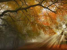 Free And Royalty-Free Abstract Images And Photographs. Tens of millions of stock images & illustrations. Thousands of new images added daily. Forest Path, Autumn Forest, Landscape Photography, Travel Photography, Dramatic Arts, Autumn Lights, Photography Competitions, Photography Awards, Photo Competition