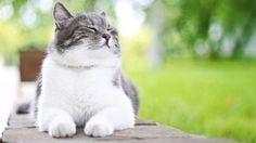 Kedilerin İnsan Tedavisindeki Etkileri