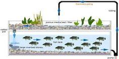 「aquaponics」の画像検索結果