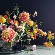 kukkakurssi-kukkakulho-hilmala Opi, Plants, Plant, Planets
