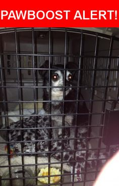 Is this your lost pet? Found in Vallejo, CA 94590. Please spread the word so we can find the owner!  Black older chihuahua with white face and charcoal color on his chest.   Kentucky Street, and Napa Street Vallejo, CA,94590 United States