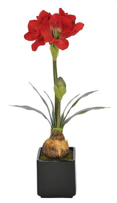 House of Silk Flowers Artificial Red Amaryllis in Gloss Black Ceramic Cube *** For more information, visit image link.