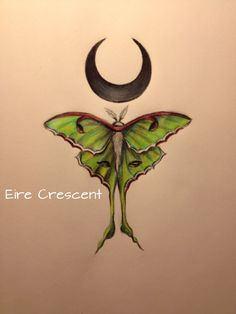 eirecrescent:  I finished drawing my luna moth and crescent moon
