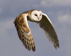 Google Image Result for http://ayearandadaywicca.files.wordpress.com/2012/07/owl1.png
