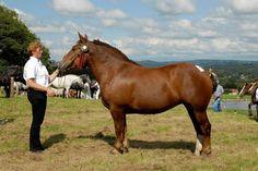 Cavalos e Semelhantes by Daniel Alho / Cavalo Bretão