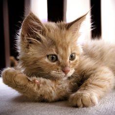 My little kitty by Bulent Sarac on 500px