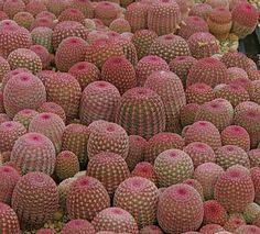 Cactus #stolenconcept