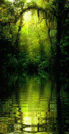 verdant pool