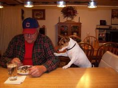 You can't eat that all by yourself. Let your faithful dog help you. #jackrussellterrier