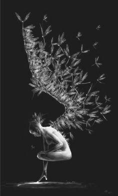 Dragonflies by Liiga Smilshkalne. °