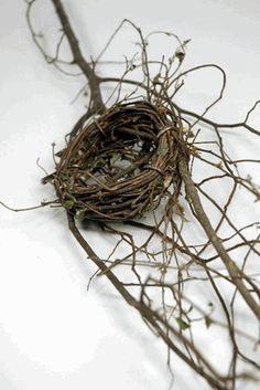 hmmm I already have original bird nests, a couple very tiny ones that are real, were blown out of trees