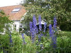 Tuinen aan de kust : Ecologische cottagetuin