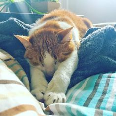 #lazysaturday #cat #bed #catsofinstagram