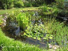 An essential element in wildlife gardening is to provide access to clean water, which is a necessity for drinking, bathing, and even reproduction for some wildlife species. In addition, managing yo. Natural Pond, Natural Garden, Pond Plants, Water Plants, Pond Design, Garden Design, Bog Garden, Pond Fountains, Pond Life