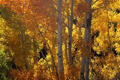 Aspen - Rock Creek
