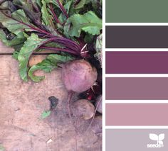 Design Seeds celebrate colors found in nature and the aesthetic of purposeful living. Colour Pallette, Colour Schemes, Color Combos, Color Patterns, Pantone, Design Seeds, Color Concept, Colour Board, Colour Colour