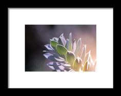 Brighten Up Framed Print By Nicole Carmine