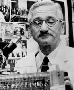 Dr. Albert B. Sabin (1906 - 1993) ~ Developer of the oral live virus polio vaccine. It was administered on a sugar cube, en masse at our school auditorium.