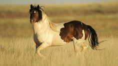 Stop the Roundup and Killing of Wild Mustangs!