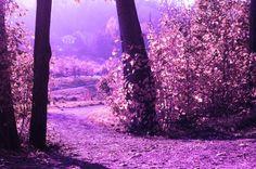 Purple Dreams by Lorena Masi